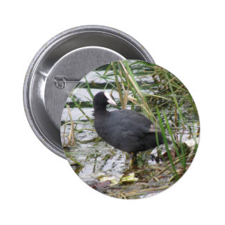 Coot on the Riverbank Button