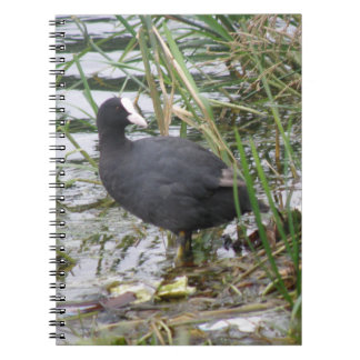 Coot on the Riverbank Notebook