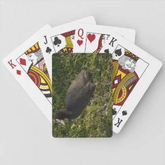 Coot Poker Deck