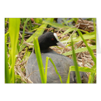 coot sitting on the nest stationery note card
