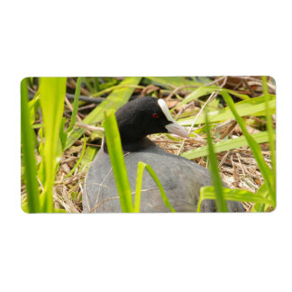 coot sitting on the nest label
