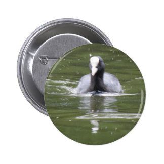 Coot Swimming Button