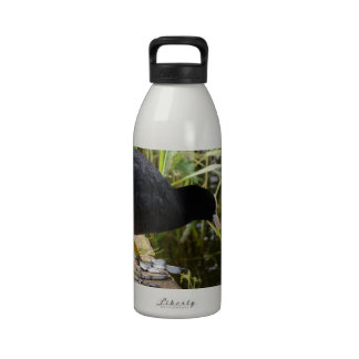 Coot Water Bottle