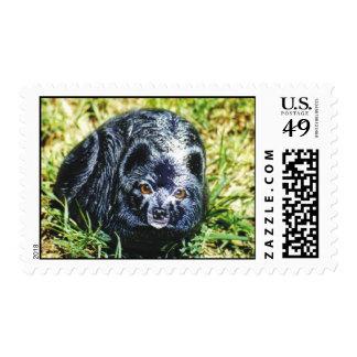 """Cootie"" dog rock stamp"
