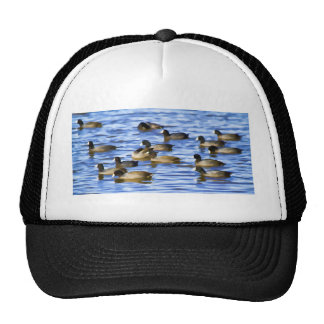 Coots, American Coots Trucker Hats