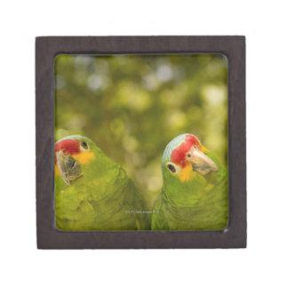 Copan, Honduras Gift Box