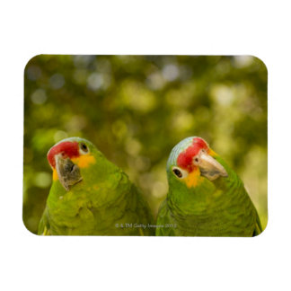 Copan, Honduras Rectangular Photo Magnet