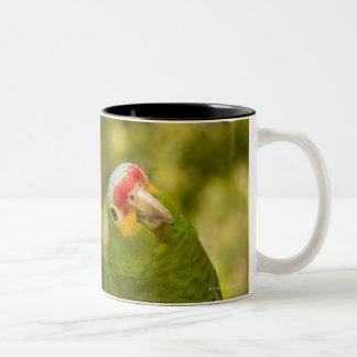 Copan, Honduras Two-Tone Coffee Mug