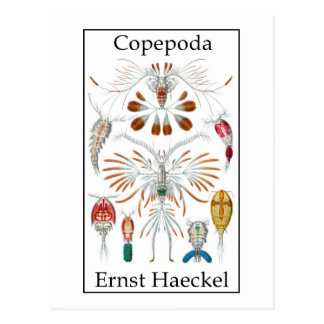Copepoda by Ernst Haeckel Post Cards
