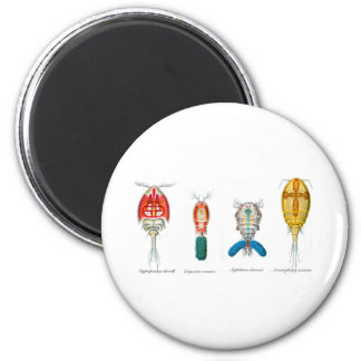 Copepods 2 Inch Round Magnet