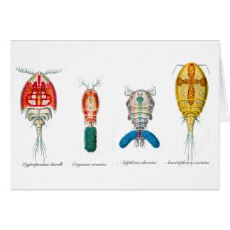 Copepods Card