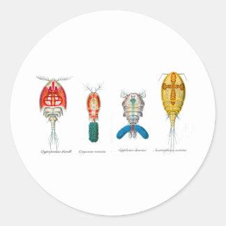 Copepods Classic Round Sticker