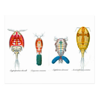 Copepods Postcard