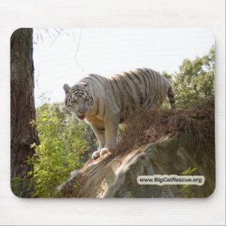 Copia blanca del tigre 013 alfombrillas de ratón