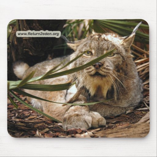 Copia canadiense del lince 4201e tapete de ratón