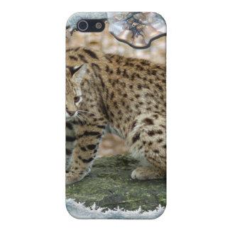 Copia de Geoffroy Cat-c-16 iPhone 5 Carcasas