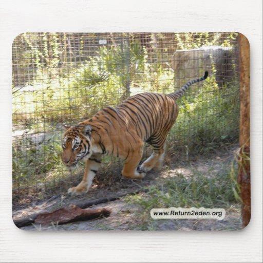 Copia del bengalí 006 del tigre alfombrillas de ratón