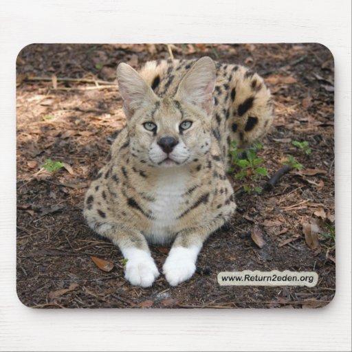copia del serval 003 alfombrilla de ratón