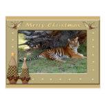 Copia del tigre Nini-c-158 Tarjeta Postal