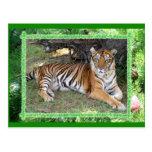 Copia del tigre Nini-c-19 Postales
