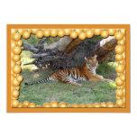 Copia del tigre Nini-c-1 Invitación 12,7 X 17,8 Cm