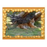 Copia del tigre Nini-c-1 Postales