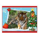 Copia del tigre Nini-c-2 Tarjeta Postal