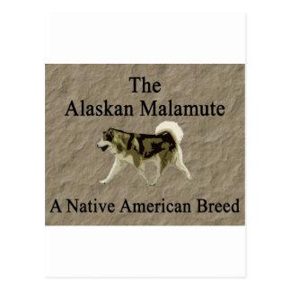 Copia nativa de la raza del malamute postales