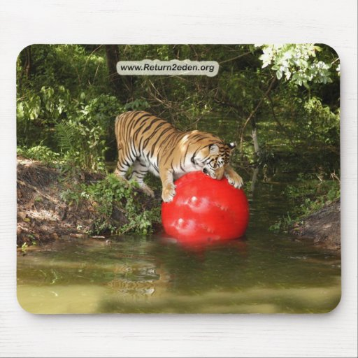 Copia Tiger_Aroara037 Tapete De Raton