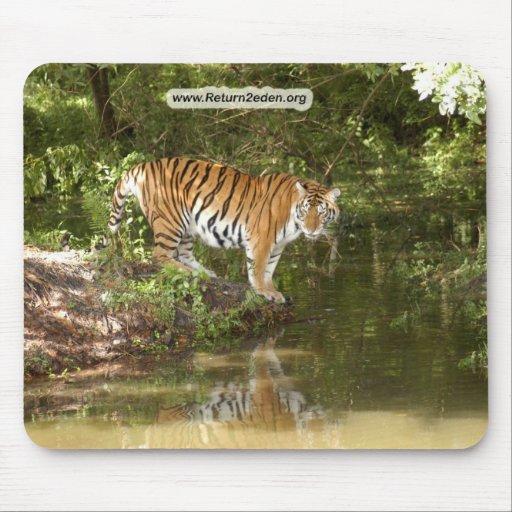 Copia Tiger_Aroara058 Alfombrillas De Ratón