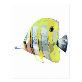 Copper-banded Butterfly Fish Postcard
