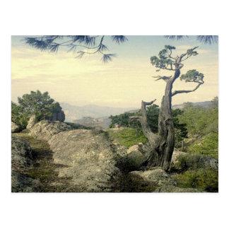 Copper Canyon Tree Postcard