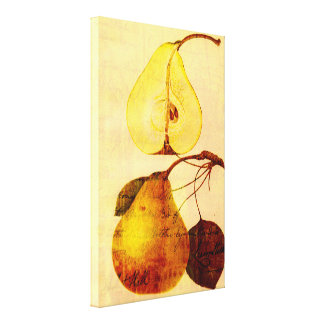 Copper Pear Canvas Print