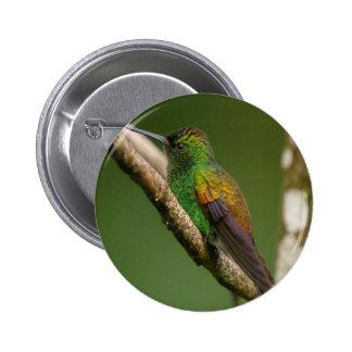 Copper Rumped Hummingbird Button