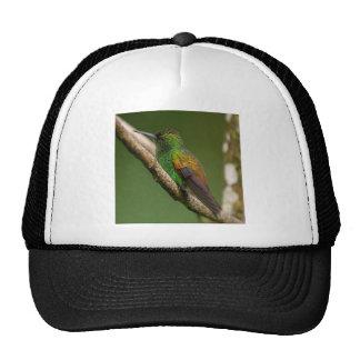 Copper Rumped Hummingbird Trucker Hat