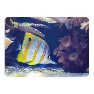 Copperband Butterflyfish Card