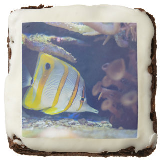 Copperband Butterflyfish Chocolate Brownie