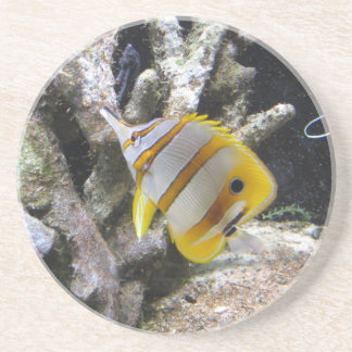 Copperband Butterflyfish Drink Coaster