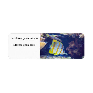 Copperband Butterflyfish Label