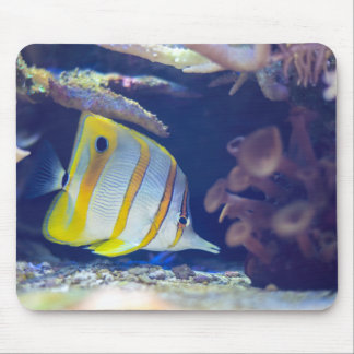 Copperband Butterflyfish Mousepads
