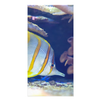 Copperband Butterflyfish Photo Greeting Card