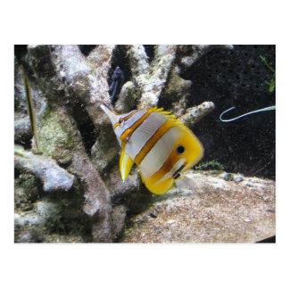 Copperband Butterflyfish Postcard
