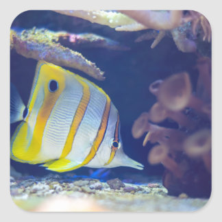 Copperband Butterflyfish Square Sticker