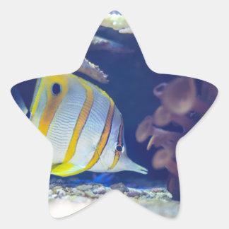 Copperband Butterflyfish Star Sticker