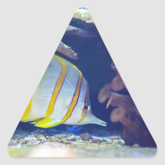 Copperband Butterflyfish Triangle Sticker