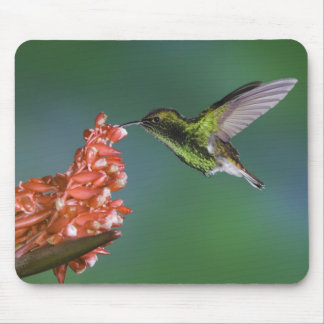 Coppery-headed Emerald, Elvira cupreiceps, Mouse Pad