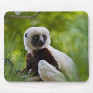 Coquerel's Sifaka in the forest 2 Mouse Pad