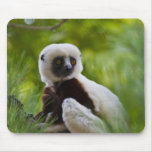 Coquerel's Sifaka in the forest 2 Mouse Pads