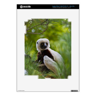 Coquerel's Sifaka in the forest 2 iPad 3 Decals