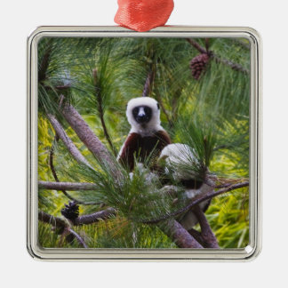 Coquerel's Sifaka in the forest Square Metal Christmas Ornament